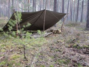 Schelter im Fichtenwald