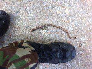 worm at Lantau