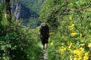 Den Rheinsteig entlang