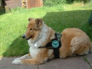 Kleine Hundesoldatin