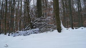 Schneetarnanzug in Aktion